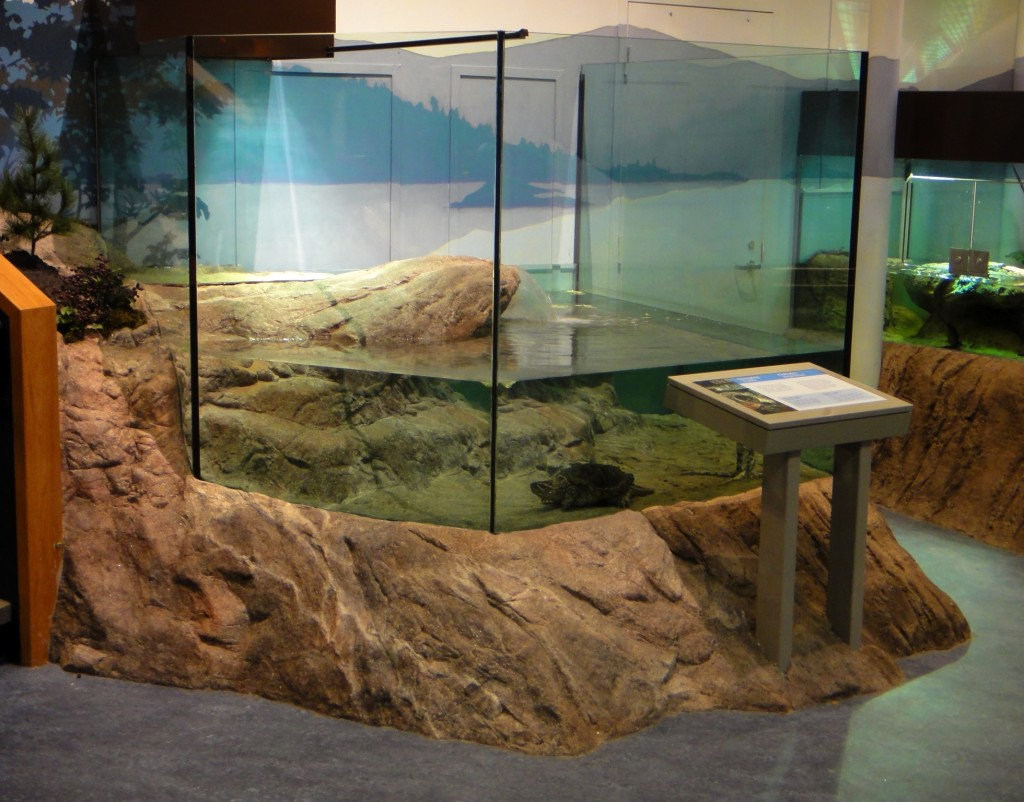 Aquariums And Terrariums Rockscapes Artificial Boulders